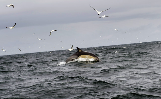 delfin_mas
