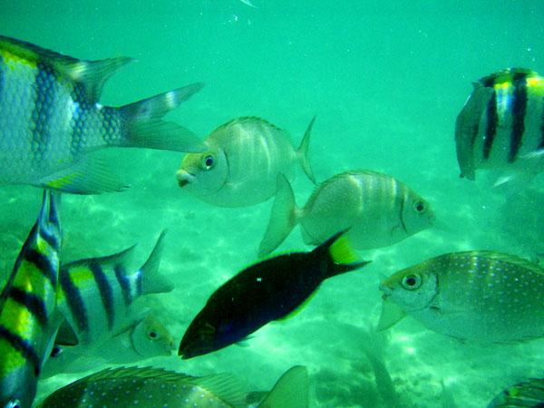 fiskstim