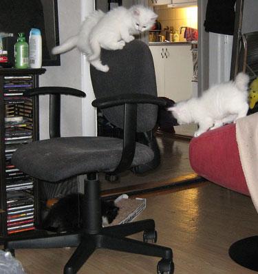 katt_stol2
