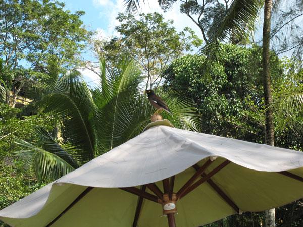 parasollpippi